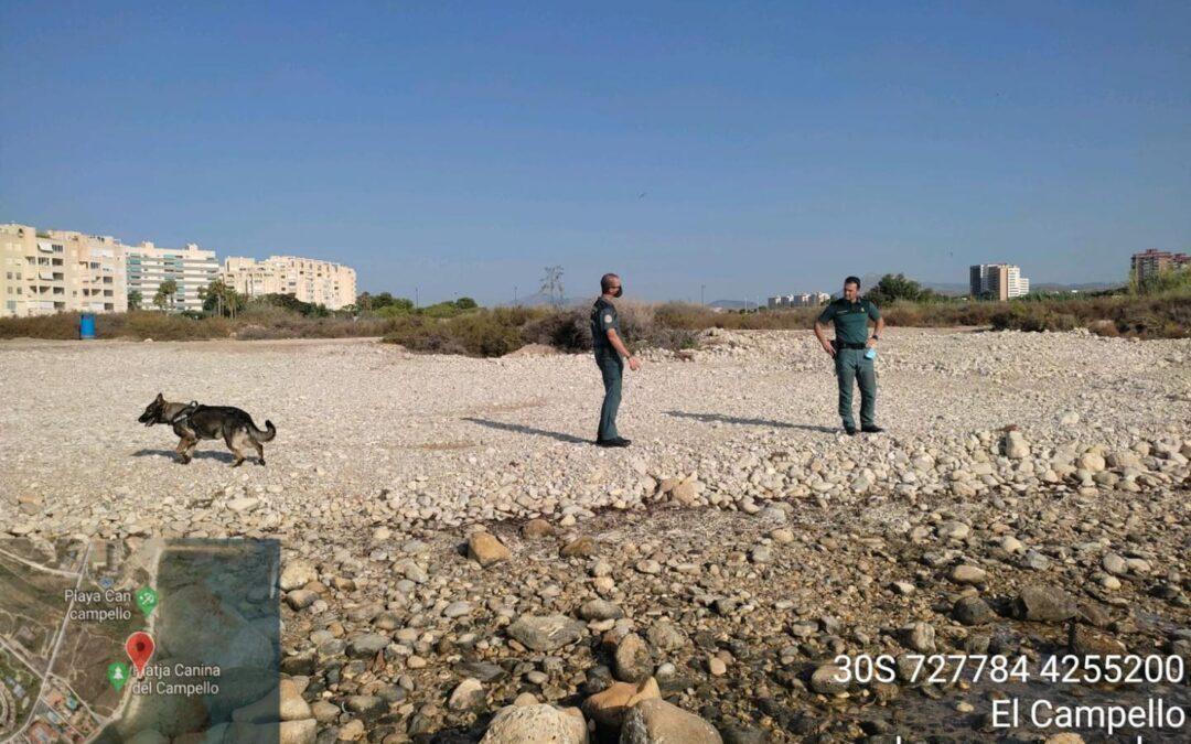 Investigan posibles envenenamientos en una playa canina de El Campello
